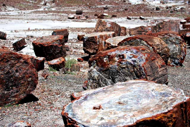 bad luck petrified forest